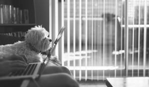 trabajar-desde-casa-aplicaciones