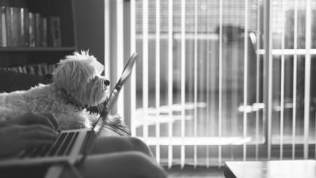 Trabajar desde casa: qué aplicaciones necesito